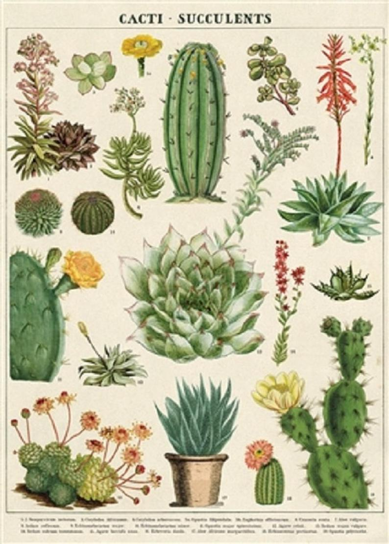 Cacti & Succulents Art Paper Cavallini Papers Wall Decor