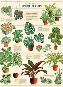 House Plants Art Paper Cavallini Papers Wall Decor