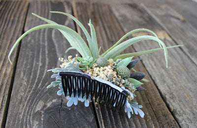 Bridal Hair Comb, Fascinator, Air Plant Succulent, Bridal Veil