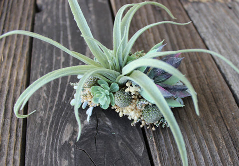 Wedding Hair Accessory- Bridal Hair Comb, Fascinator, Decorative Comb, Air Plant Succulent, Dusty Miller, Silver Brunia, Bridal Veil