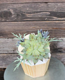Small Artificial Succulent arrangement, centerpiece, midcentury modern handpainted white natural wood vase, home decor, sola flowers, house warming, wedding