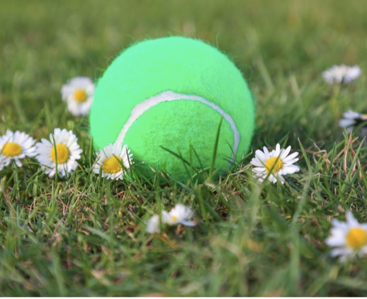 Original Scented Grass Green Tennis Balls - The Perfect Provenance