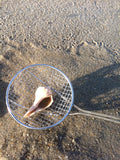 Sand Dipper - Long Adjustable Beach Combing Pole with Basket