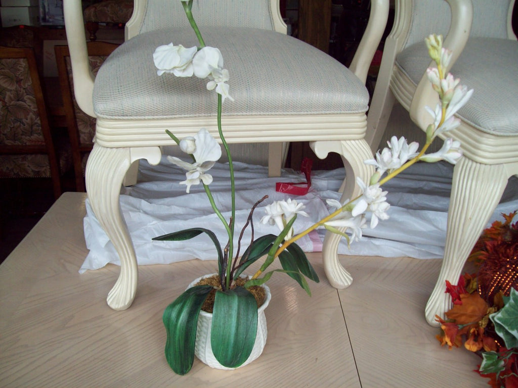 Orchid 17706
