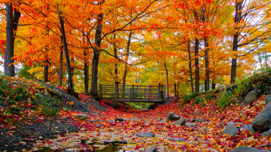 Where to Experience the Best Fall Foliage