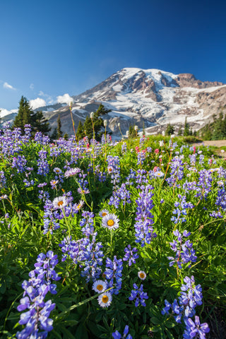 Karimah Dossa, Anatomie Escape Artist, will let you breathe fresh air, relish in the wildflowers all around, while endless views of snow-capped mountains surround you