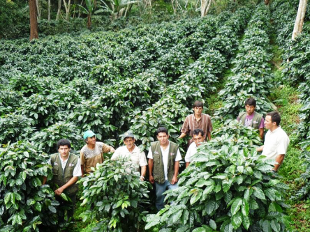 Peru Organic Fair Trade Cenfrocafe Coffee Beans - 1 Pound