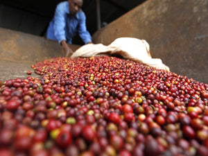 Roasted Coffee: Kenya Kieni AA 1 pound bag