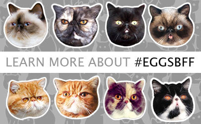 About #EggsBFF