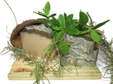 "alt = ""rosemary peppermint shampoo bar soap silky natural display with herbs"""