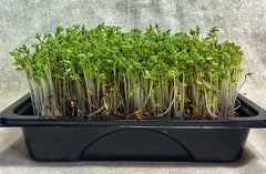 Nutritionally Dense Super Cress Starter Kit, Supplies for 6 Crops