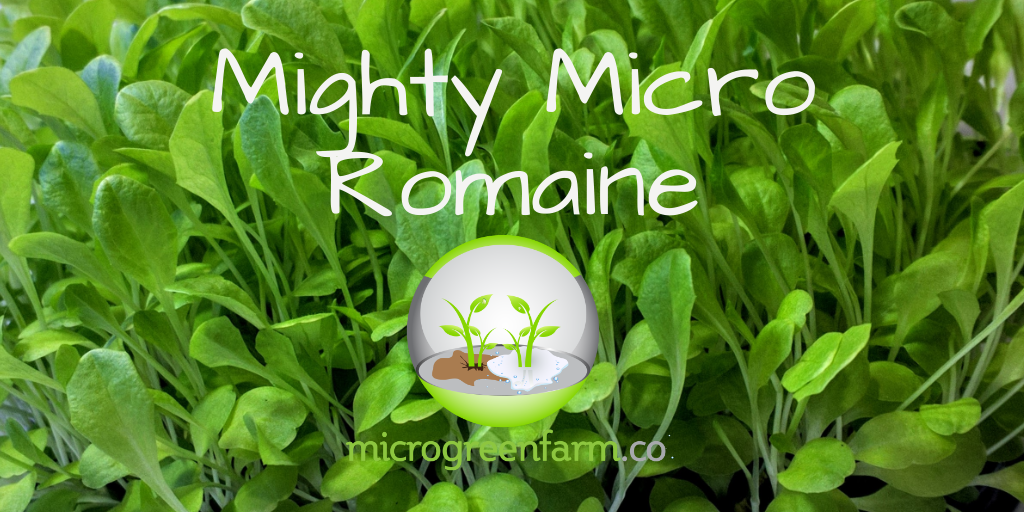 Deluxe Mighty Micro Romaine Lettuce Microgreens