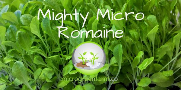 Deluxe Mighty Micro Romaine Lettuce Microgreens, Seed and Soil for 3 Crops