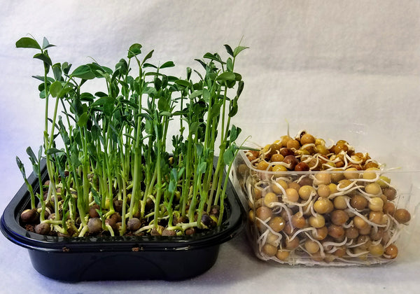 Shoots and Sprouts, Combo Kit that Raises the Nutrition Bar