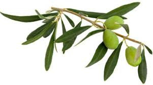 save-our-skin-olive-leaf-extract-eye-serum