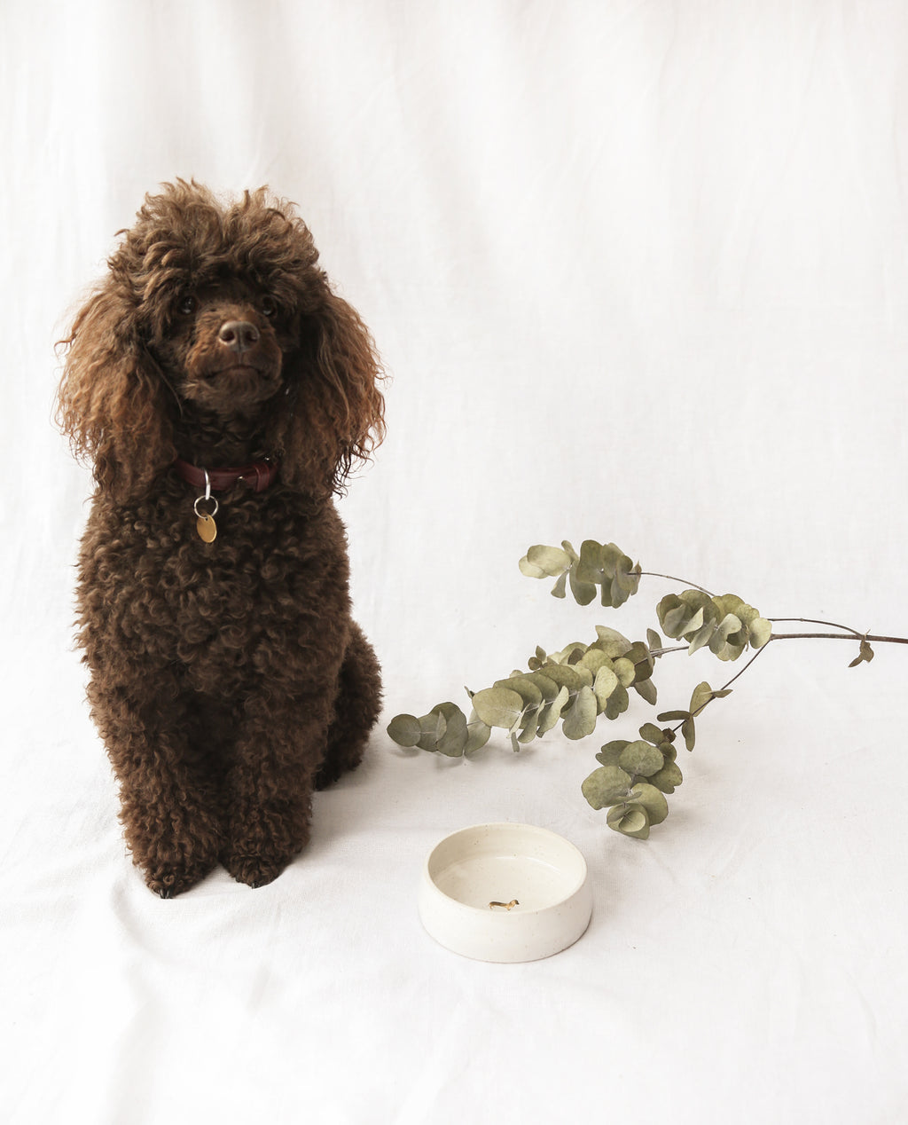 Gold Leaf Dog Bowl