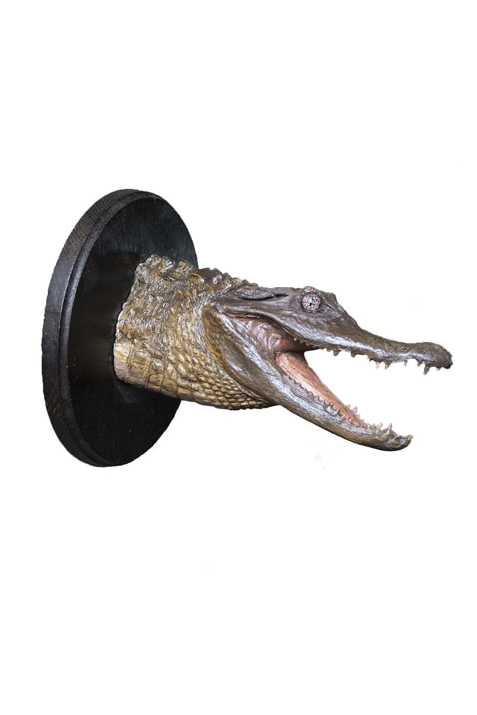 Taxidermy Crocodile Head Mount