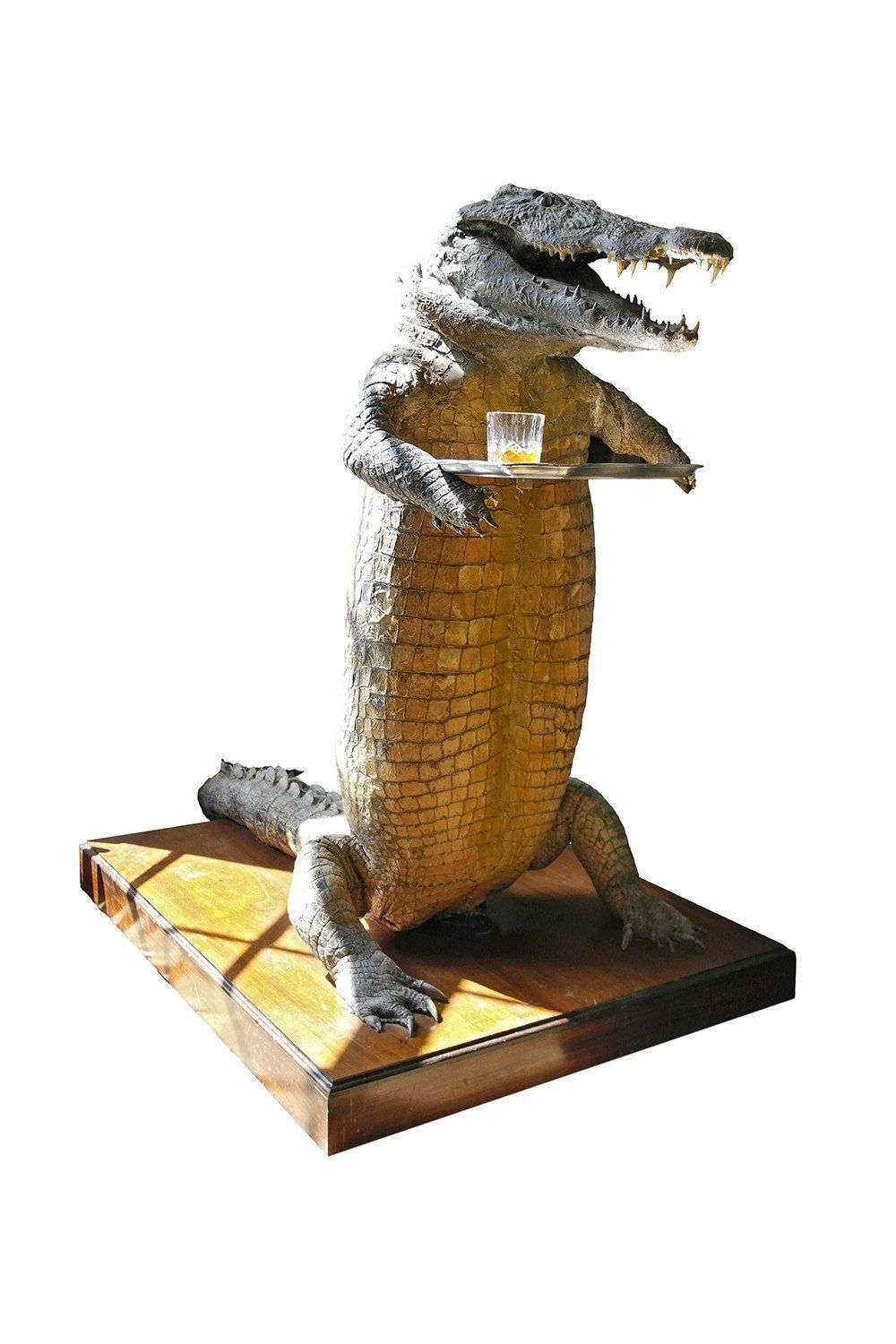 20th Century Taxidermy Crocodile Waiter