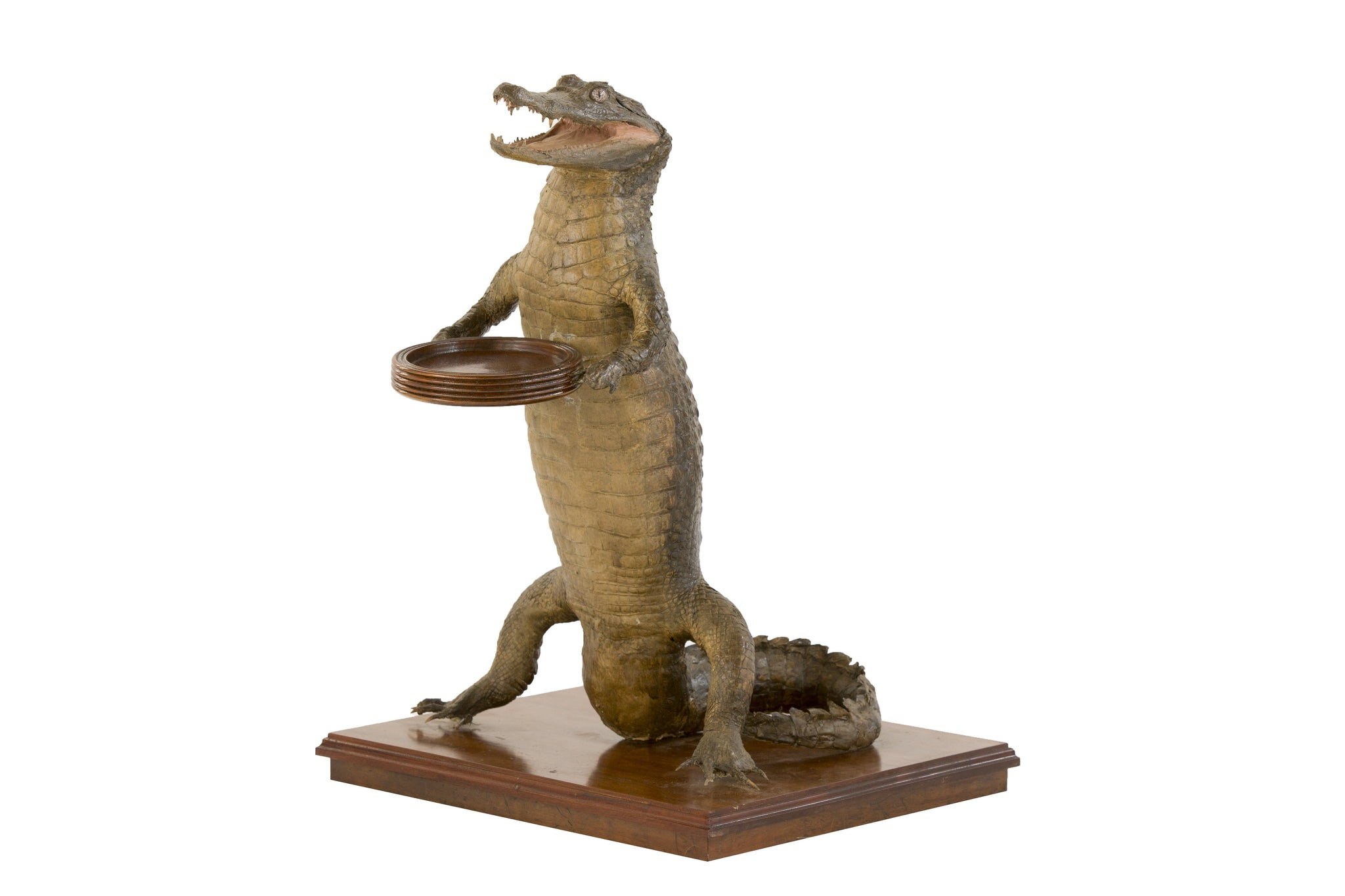 Crocodile Waiter 3