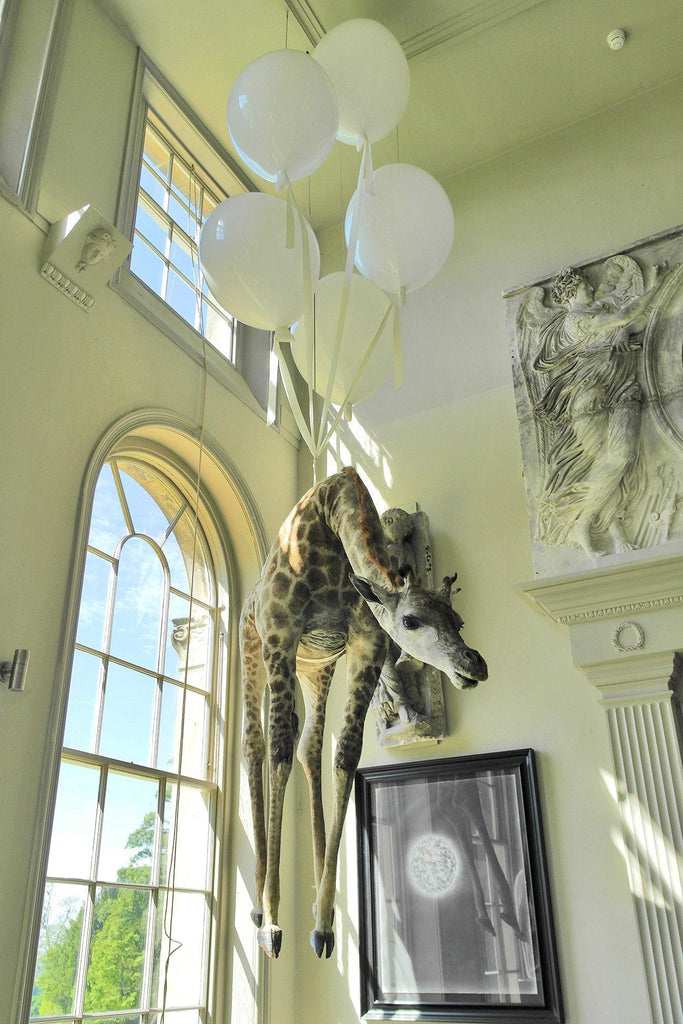 'Flying Giraffe' by James Perkins Studio - A Modern Grand Tour
