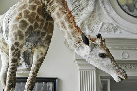 Flying Giraffe by James Perkins Studio