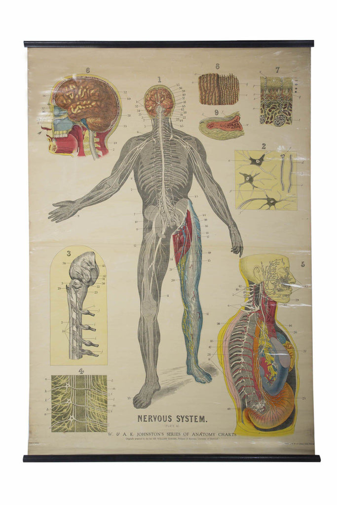 W. & A.K. Johnston's early 20th Century anatomy - Nervous system - A Modern Grand Tour