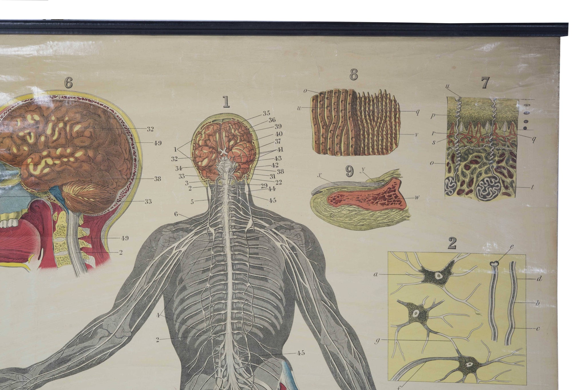 W Ak Johnstons Early 20th Century Anatomy Nervous System A