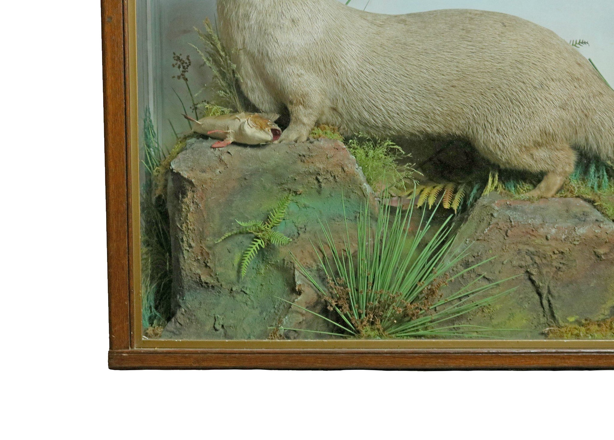 Taxidermy Study of an Otter