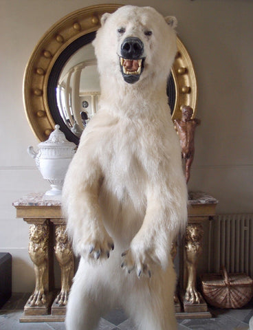 Taxidermy Full Size Polar Bear on Rock Mount – A Modern Grand Tour