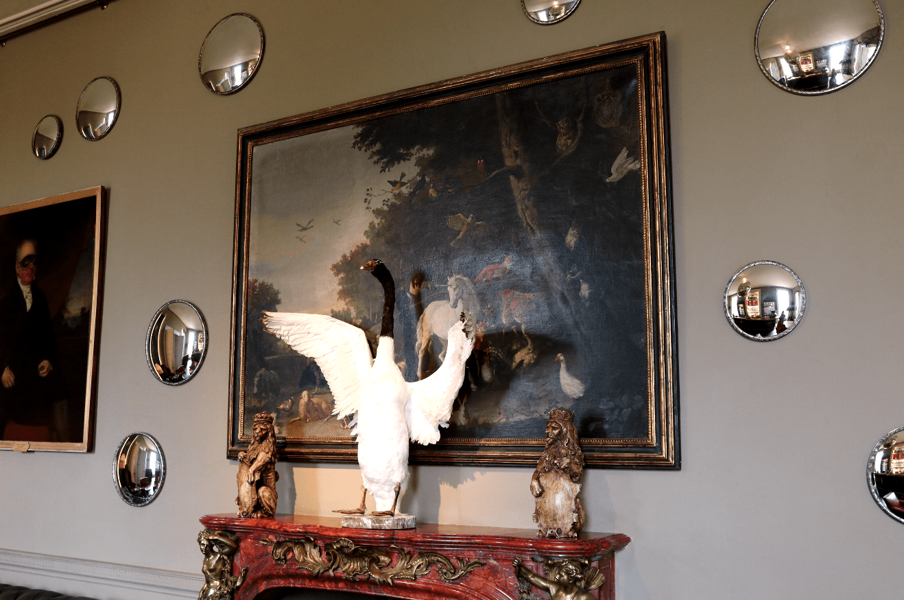 20th Century Taxidermy Black-Necked Swan - A Modern Grand Tour