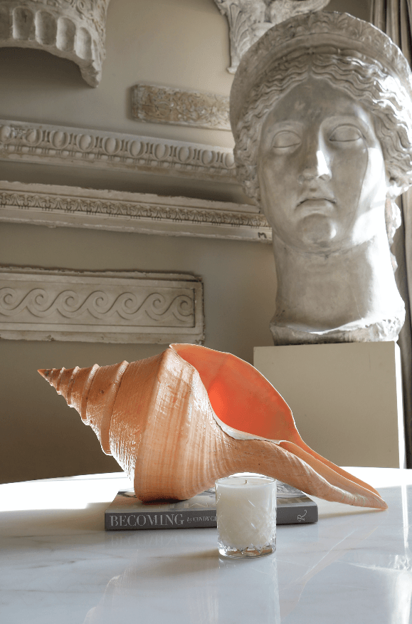 Syrinx Aruanus Large Shell - A Modern Grand Tour