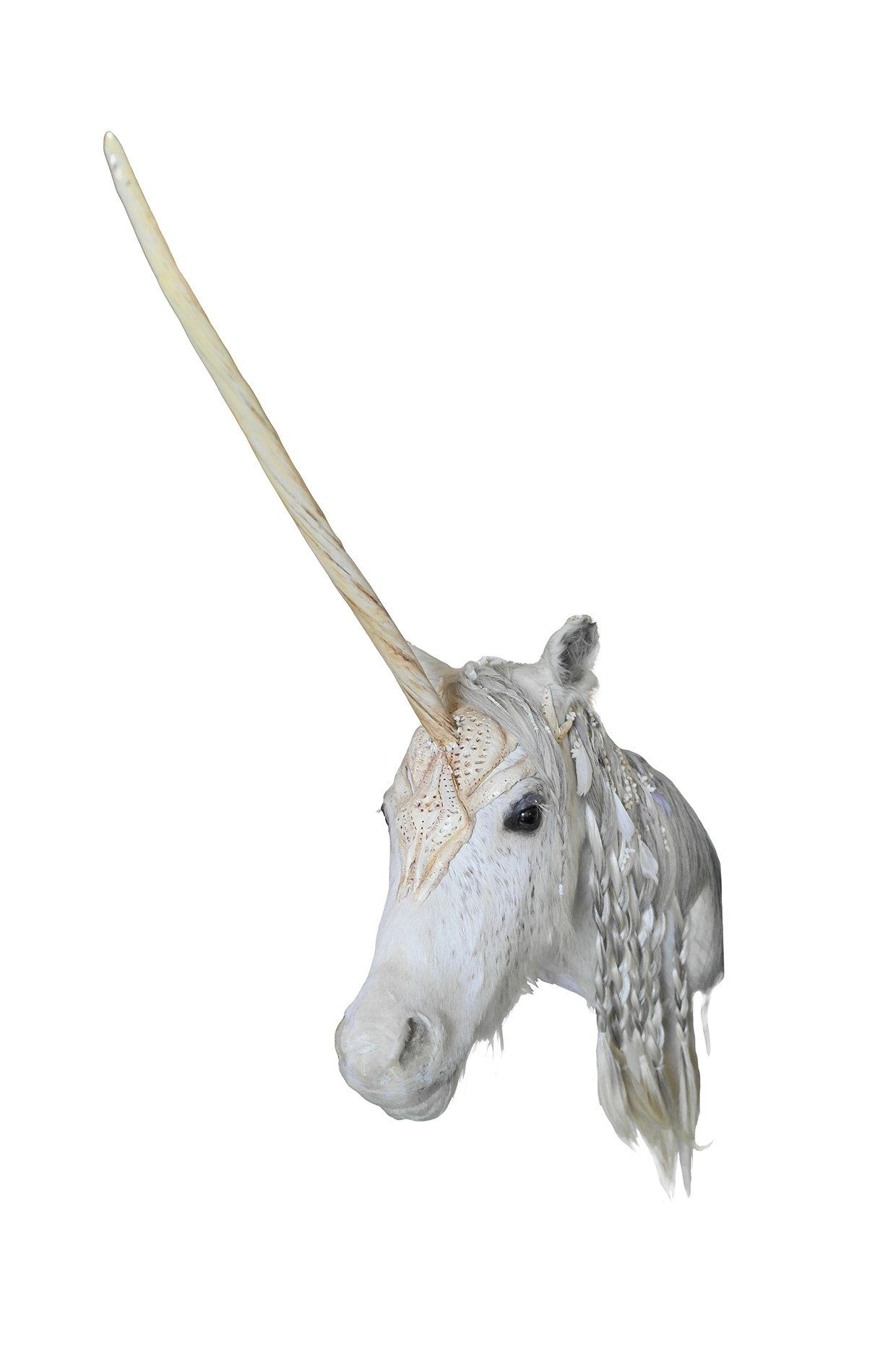 Decorated Taxidermy Unicorn Mount