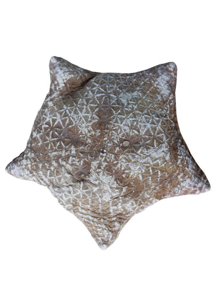 Halityle Regularis Pillow Starfish - A Modern Grand Tour