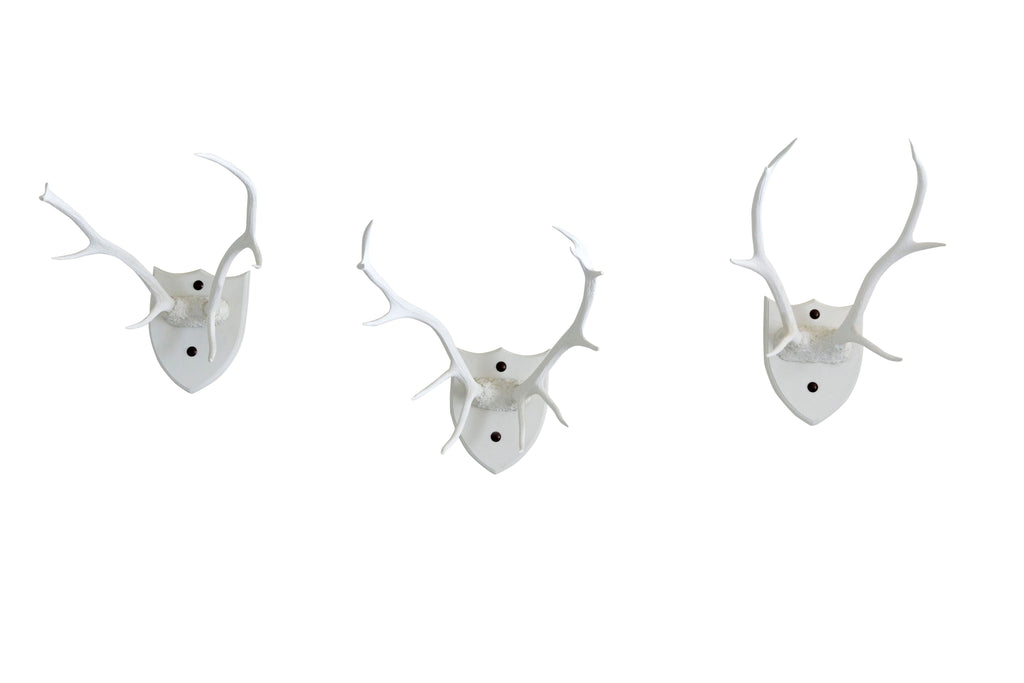 Three White Antlers