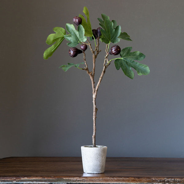 Potted Fig Topiary