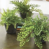 Faux Potted Fern - Set of Three