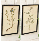 Garden Botanical Prints - Set of Two