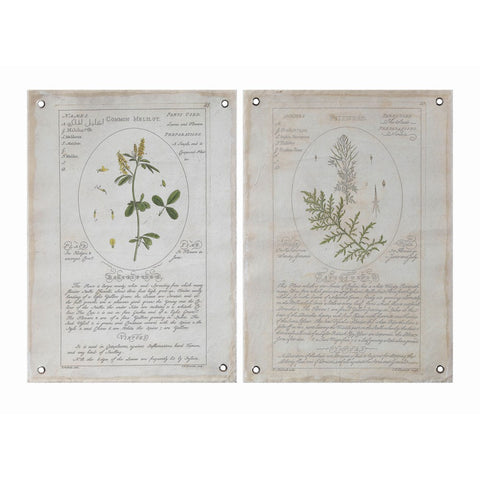 Canvas Botanical Wall Art - Set of Two