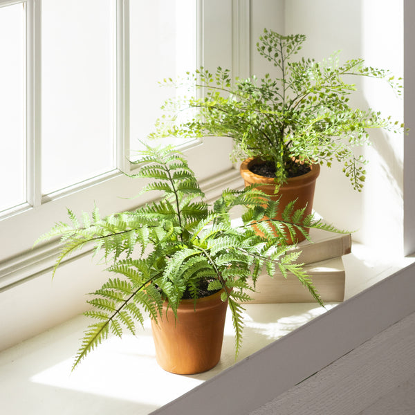 Potted Ferns - Set of Two