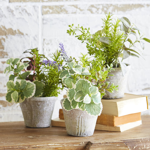 Potted Herbs - Set of Three