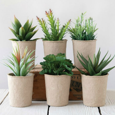 Faux Succulents in Paper Pots - Set of Three