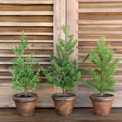 Potted Pine Trees - Set of Three