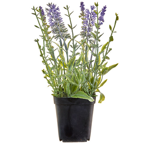 Potted Lavender - Set of Two