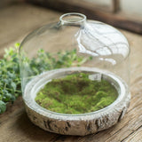 Glass Cloche Terrarium