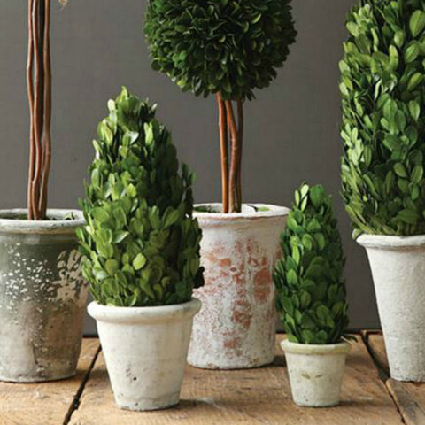 Preserved Potted Boxwoods - Four Styles