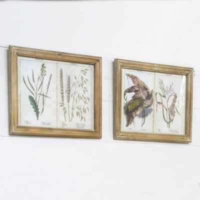 Set of two framed grains and grasses artwork prints