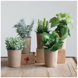 Faux Herbs in Paper Pots-Set of Five