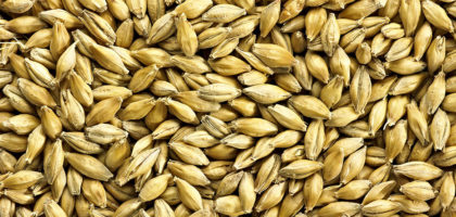 Simpsons Finest Pale Ale Golden Promise Malt (25kg)