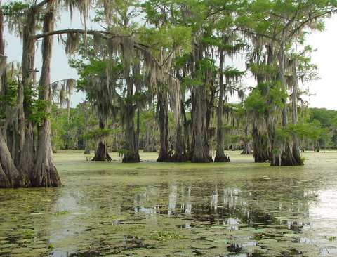 Caddo Lake Louisiana and Texas