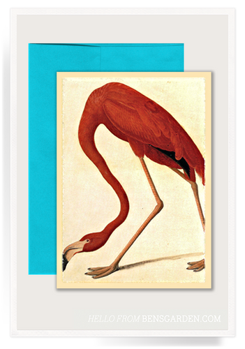 Flamingo Folded Greeting Card